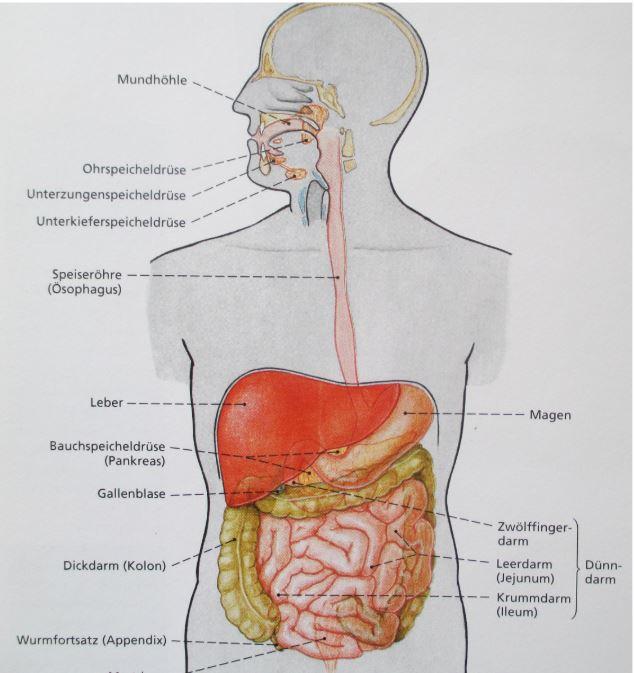 Symptome traege Leber
